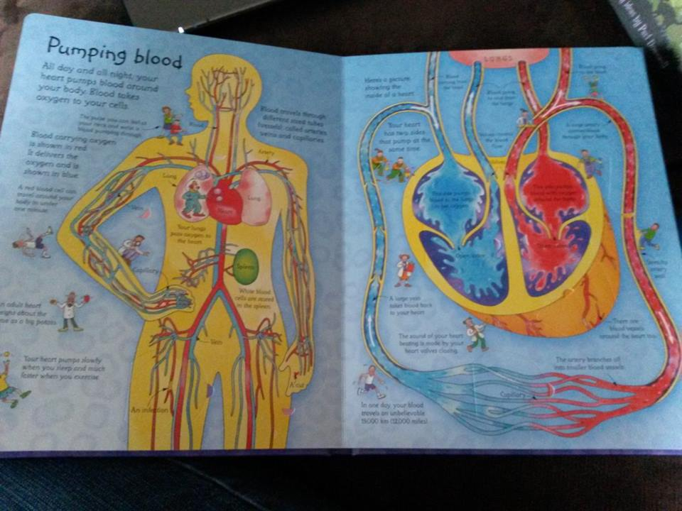 See inside Your Body2